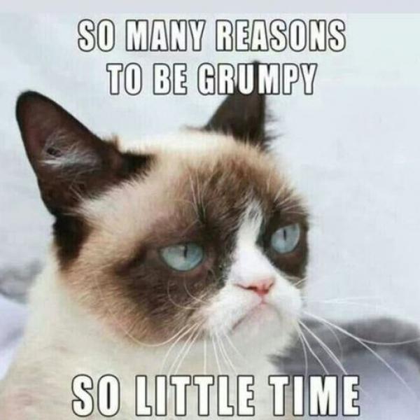 27 8317ec541a grumpy cat meme