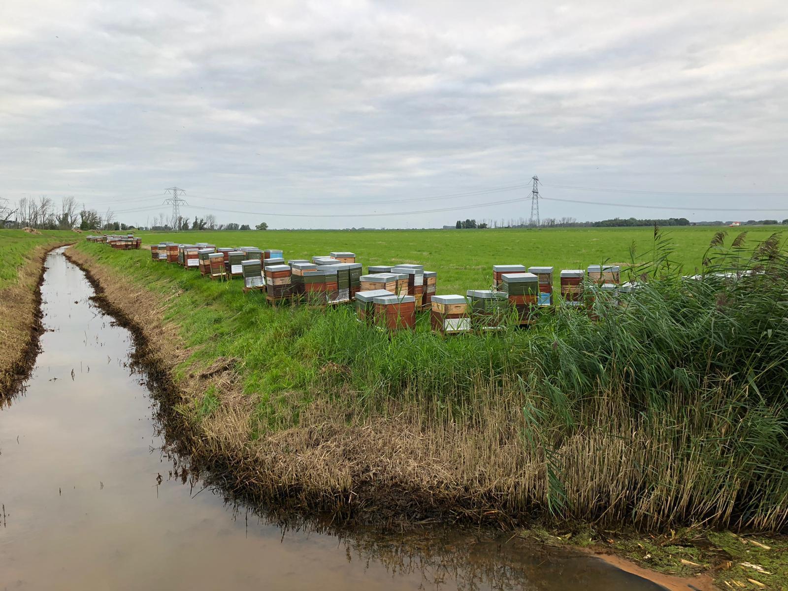 Bijenkasten bij de Biesbosch