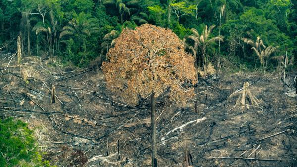 12 856faf05e2 Deforestation Amazon Trincheira Bacaja Para FOTO Fabio Nascimento Greenpeace