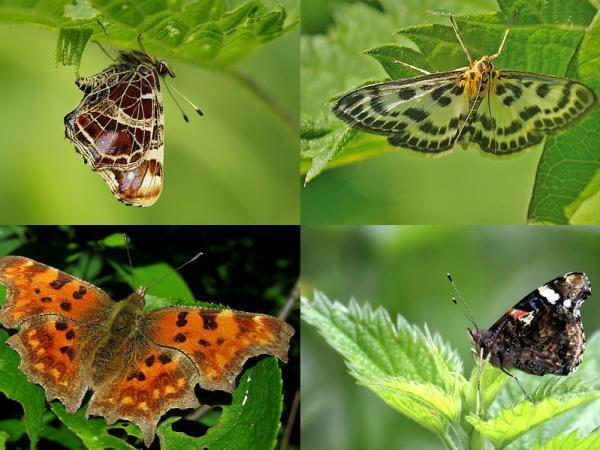 17 de vlinders