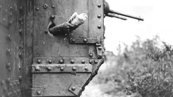 20 62d62748be Messenger pigeon released from British tank 1918 IWM Q 9247