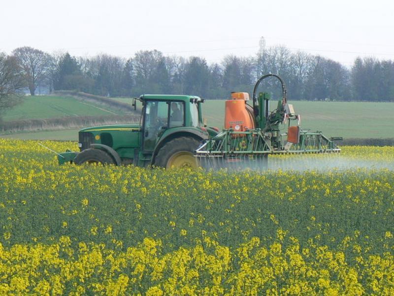 391 koolzaad pesticiden