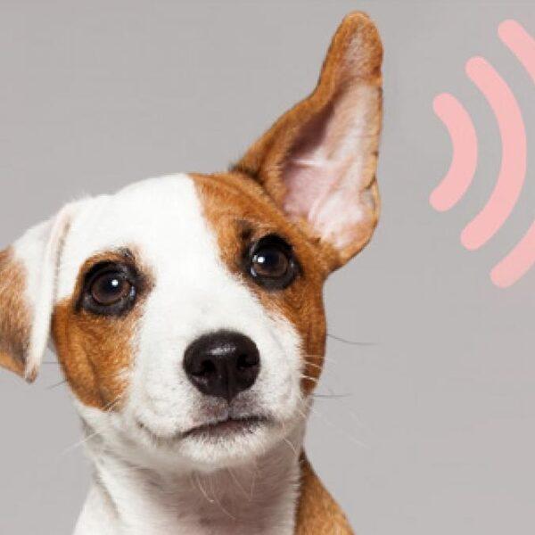 Winnaars NTR Podcastprijs: oorsuizen en eenzame uitvaart
