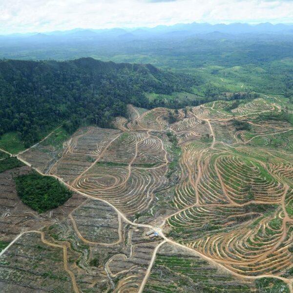 Palmolie-industrie wil met radarbeelden ontbossing tegengaan