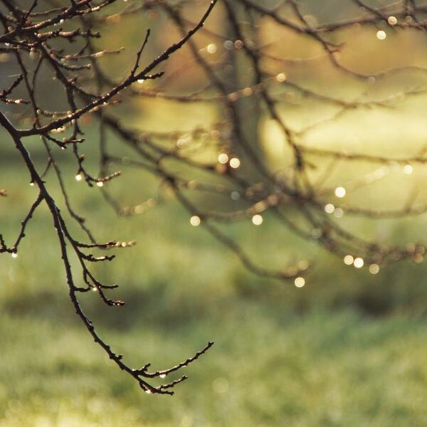 De warme bosgrond na een buitje: hoe heet die geur ook alweer?