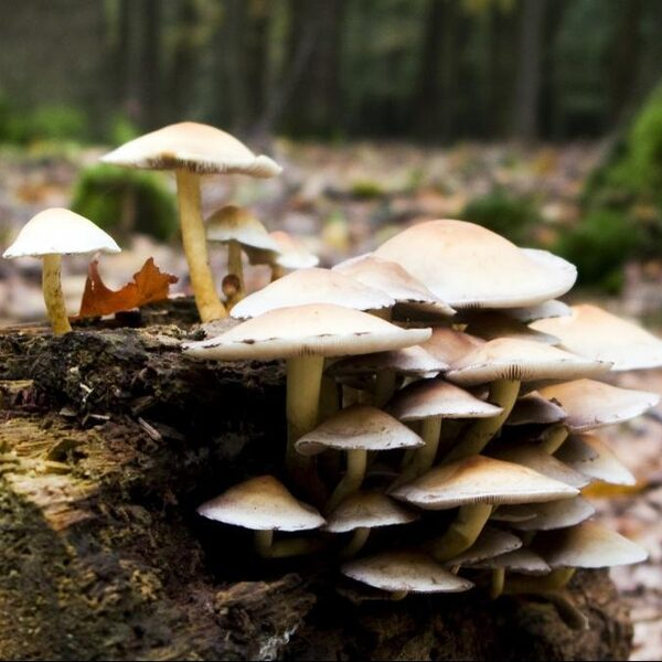 Ook paddenstoelen hebben last van stikstof
