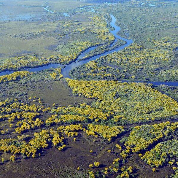 Natuurramp in Zuid Amerika: grootste moerasgebied van de wereld staat in brand