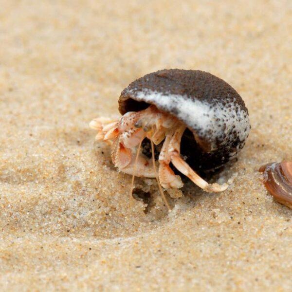 Zo maak je jouw strandwandeling nog leuker