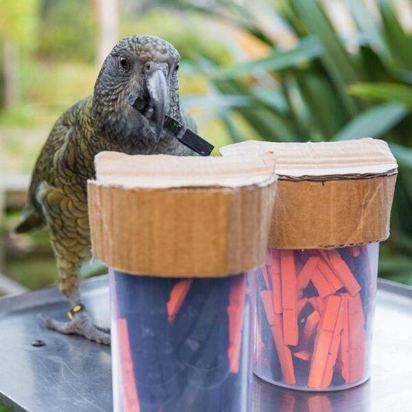 Deze papegaaien trappen niet in de dubbele bodem van een fles