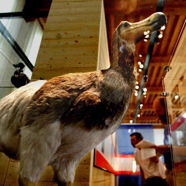 Het jaar 1698: waarom werd Manneken Pis voor het eerst aangekleed en hoe stierf de dodo uit?