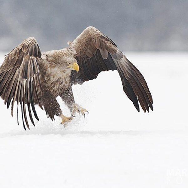 Vroege Vogels presenteert: de mooiste natuurbeelden en een nieuwe dierenpodcast