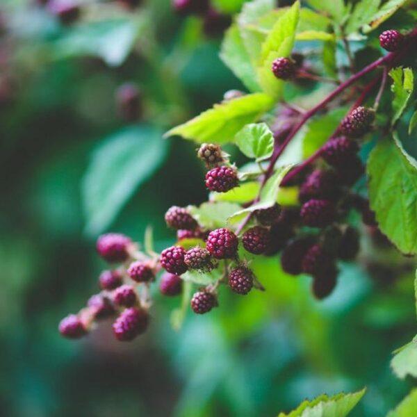 Eten we straks allemaal uit een voedselbos?