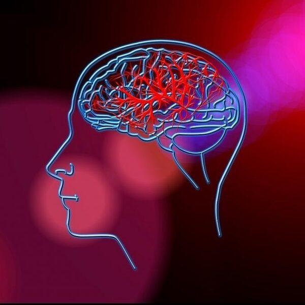 Waarom hechten we zoveel belang aan de hersenwetenschappen?