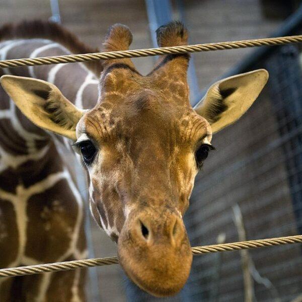'De dierentuin is niet meer van deze tijd'