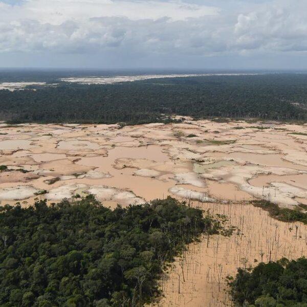 Onderzoek: miljoen soorten met uitsterven bedreigd