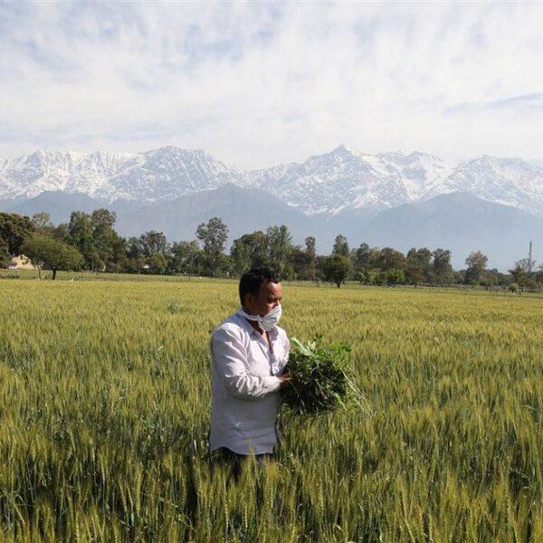 Internationale voedselvoorziening in gevaar door corona