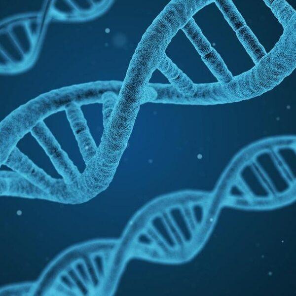 Particuliere DNA-databanken kunnen helpen bij het oplossen van moordzaken