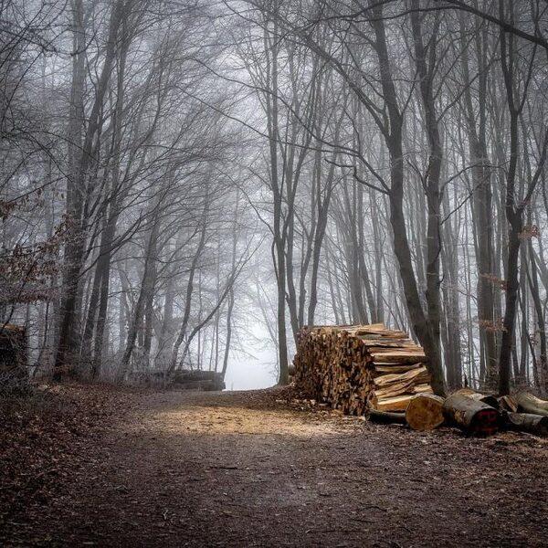 Wat willen we van het bos? 5 experts over de toekomst van bomen
