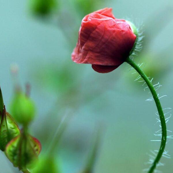 Plantenseks op de gevoelige plaat: dit is hoe bloemen het doen