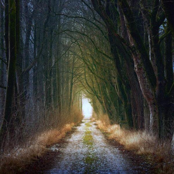 Bomen in karakteristieke dorpsstraat maken plaats voor asfalt