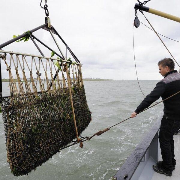 Volbouwen Noordzee met windmolens: 'De burger pikt dit niet, weet het effect niet'