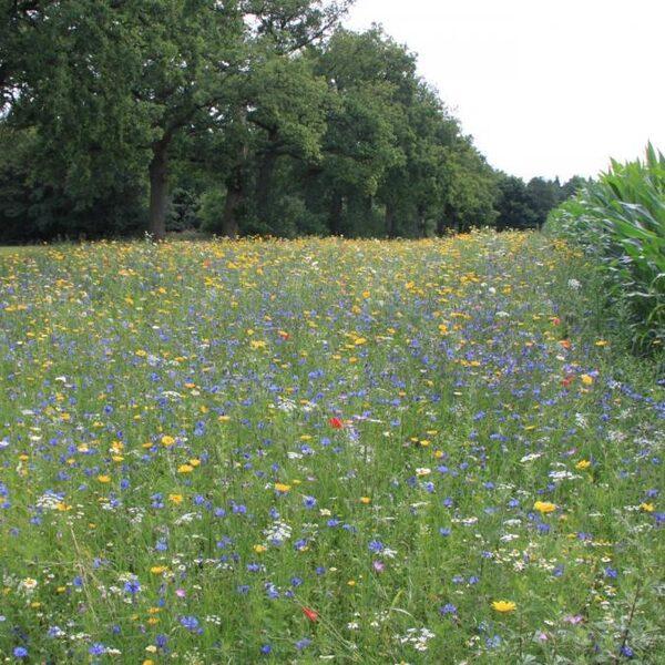 Landbouw ten koste van natuur en biodiversiteit: dit kun jij daaraan doen