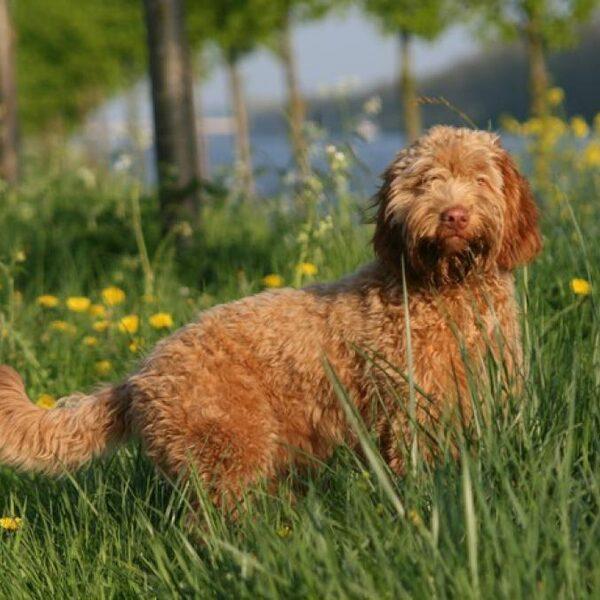 Natuur door de ogen van de hond: 'Dit is mijn gebied'
