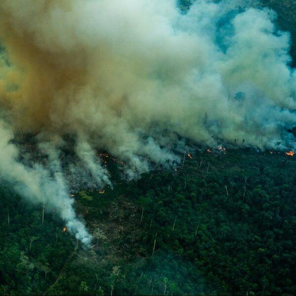 Kap snel het Amazonewoud nu niemand oplet