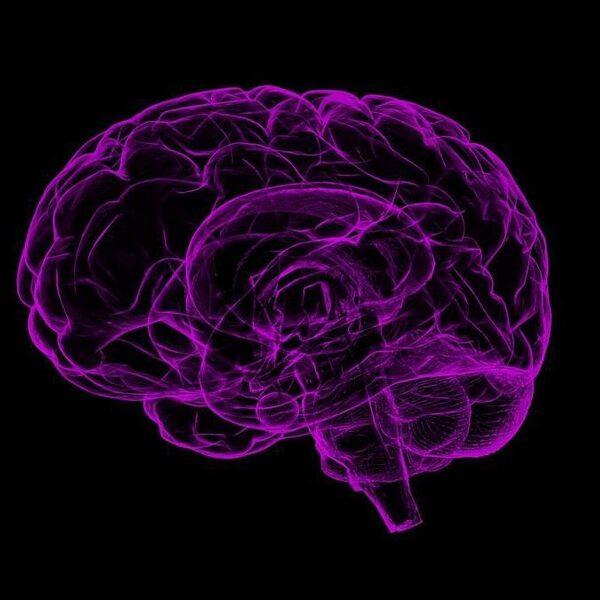 Danken wij ons grote brein aan zetmeel?