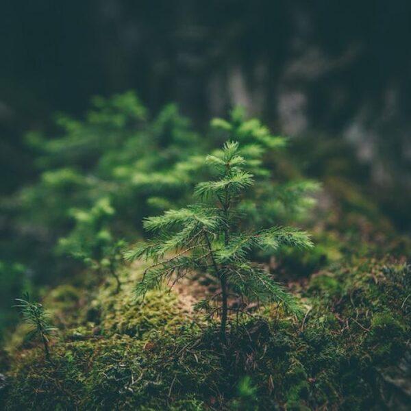 Kunnen bomen elkaar een handje helpen?