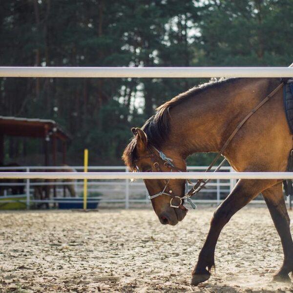 Deze innovaties zijn 'klapschaatsmoment' voor paardensport