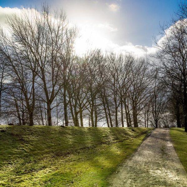 50.000 bomen geplant door boeren voor biodiversiteit