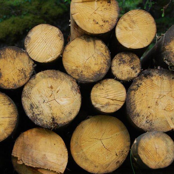 Urgenda: Liever aardgas dan biomassa