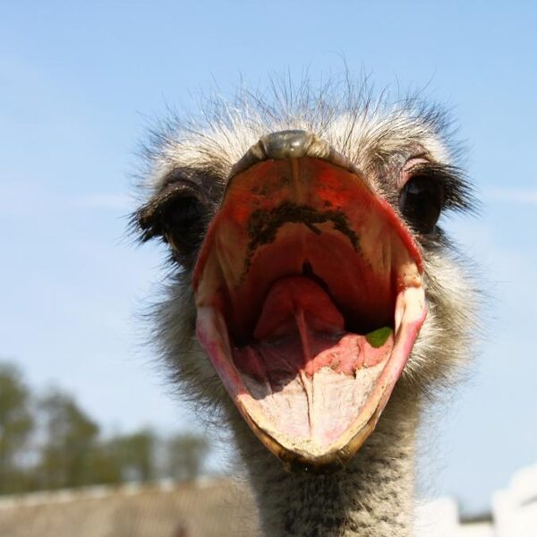 Mensen zijn spreekwoordelijke struisvogels: 'Ze kijken weg en negeren problemen'