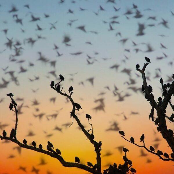 De wereld telt 50 miljard vogels - vooral zeldzame