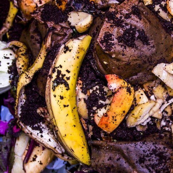 Voorkom voedselverspilling: 'Weet het verschil tussen THT en TGT'