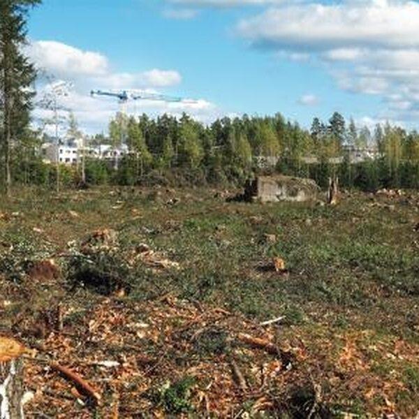 Verplichte CO2-boekhouding voor bijstook biomassa: vangen we alle emissies?