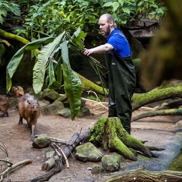 De dierentuin is meer dan aapjes kijken
