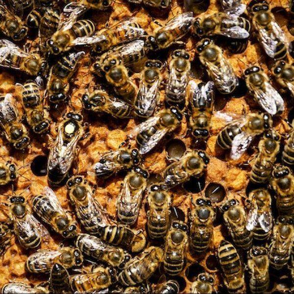 We kunnen niet zonder insecten, dit plan moet ze redden
