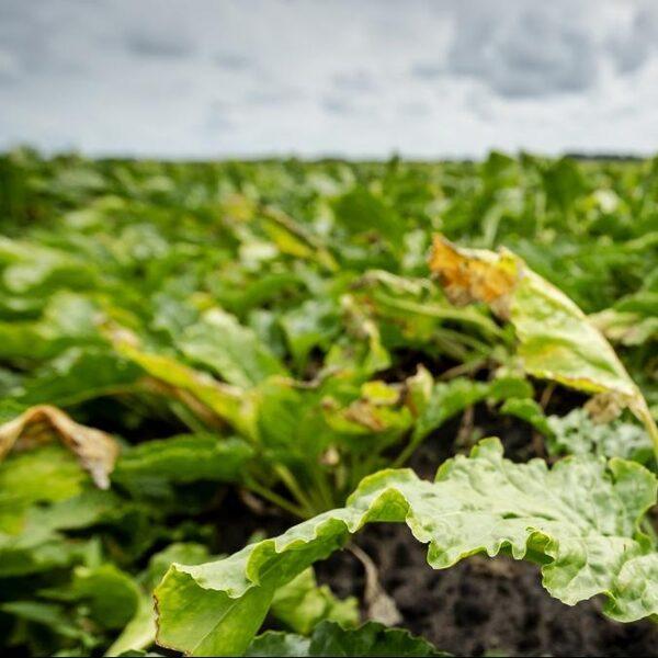 Hoe maken we voedselconsumptie duurzamer en gezonder?