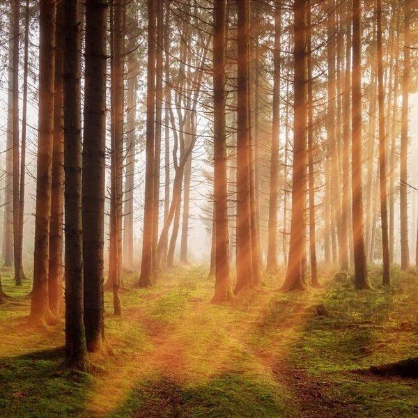 Het bos is geen recreatiegebied