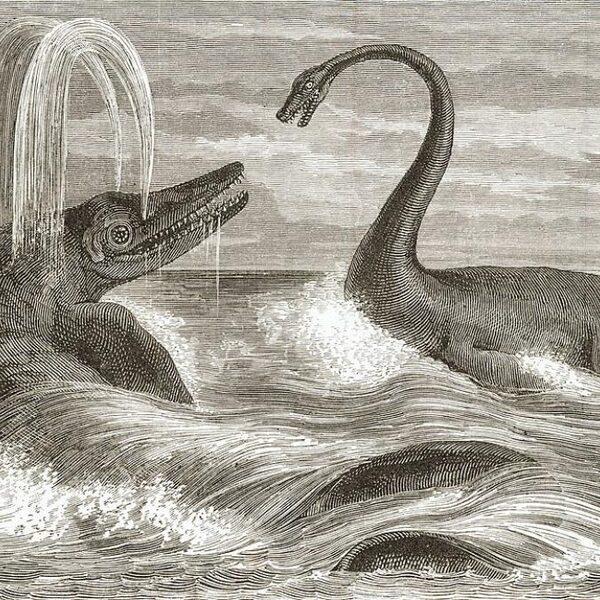 Oerdolfijn was 240 miljoen jaar geleden al een megapredator