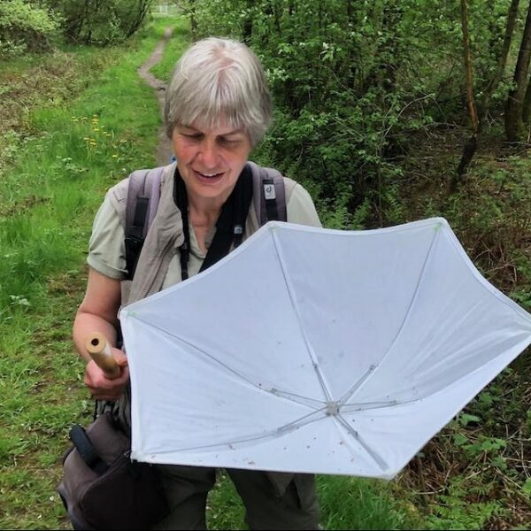 Lieveheersbeestjes vangen in een paraplu