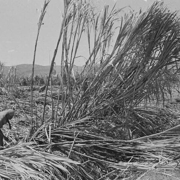 Dit gebeurde er op suikerplantages in Ethiopië