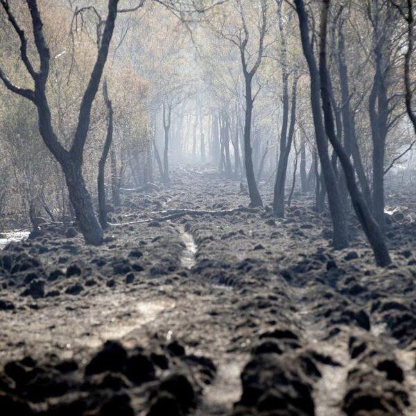 Peelbrand is grote klap voor hoogveenlandschap