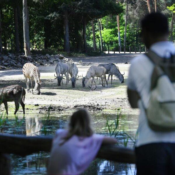 Waarom is 'Het echte leven in de dierentuin' zo succesvol?