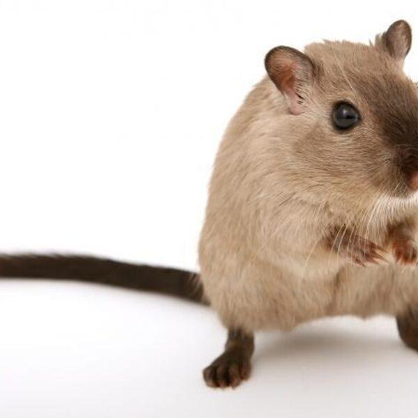 'Testen giftige stoffen op proefdieren is helemaal niet nodig'