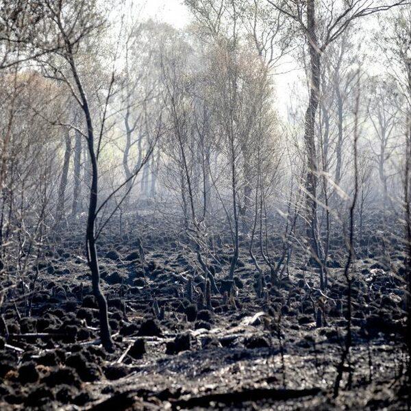 Brand Deurnese Peel laat zien dat extreme droogte ook in Nederland leidt tot extreme bosbranden