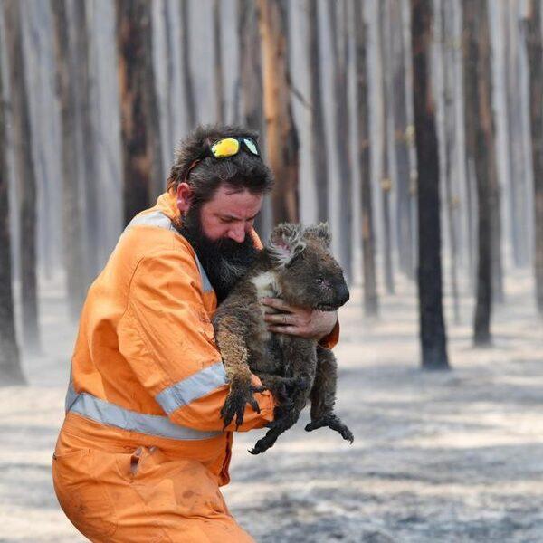 Bosbranden Australië: 'Dit gaat vaker voorkomen'