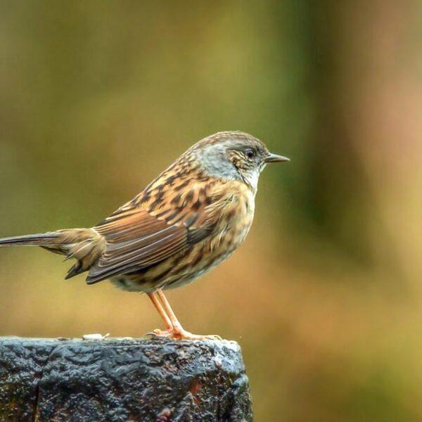 Zangvogel en roofvogel: een moreel dilemma